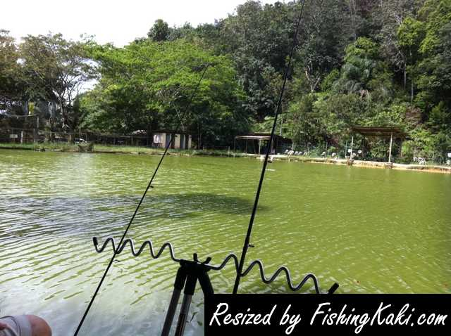 Kulai Malaysia  city photos gallery : Malaysia Kulai Fishing Pond review FishingKaki.com