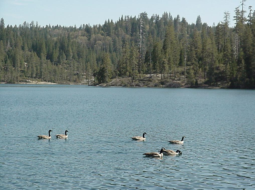 Trout fishing in the sierra nevada mountains of california for Fishing lakes in southern california