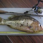 JWfishing
